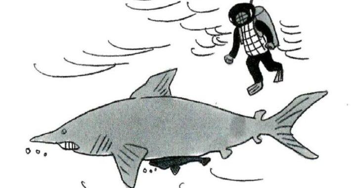 サメと小判ザメ